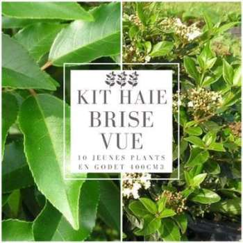 Kit Haie Brise Vue - 10 jeunes