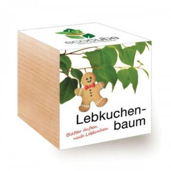 Ecocube - plantes dans cubes