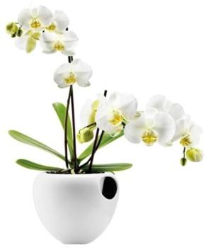 Vase Eva Solo Orchidée