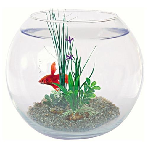 Recherche plante du guide et comparateur d 39 achat for Petit aquarium boule