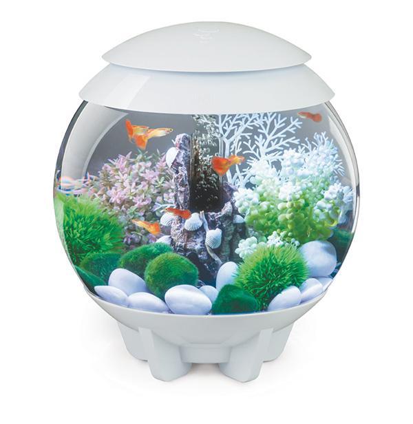 Catgorie aquariums terrariums du guide et comparateur d for Achat aquarium rond