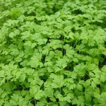 Cat gorie plante dext rieur du guide et comparateur d 39 achat - Plantes d exterieur resistant au froid ...